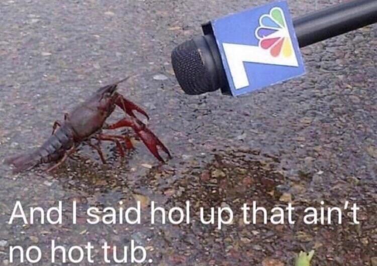 Arthropod - And I said hol up that ain't no hot tub:
