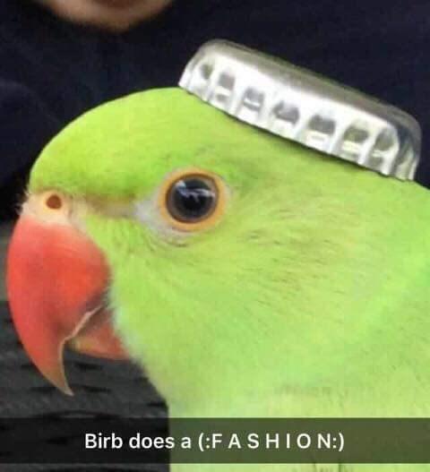 Bird - Birb does a (:FASHION:)