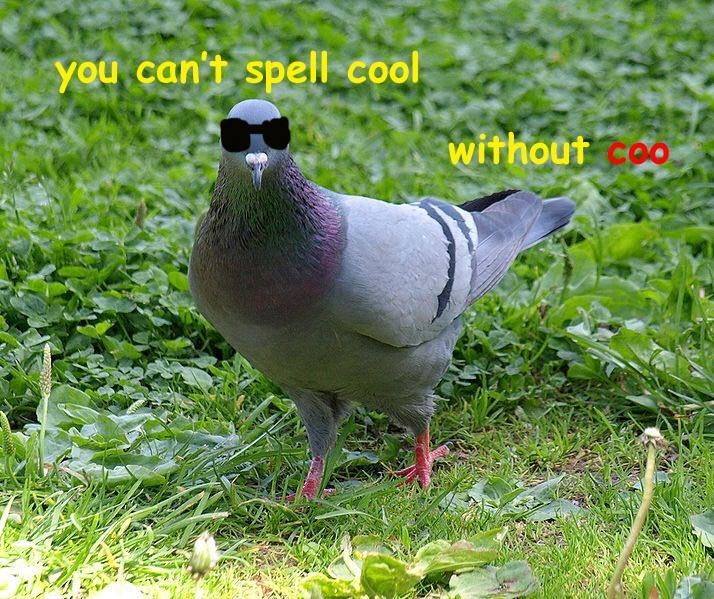 Bird - you can't spell cool withouto