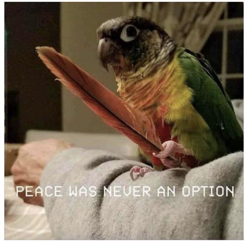 Bird - PEACE WAS NEUER AN OPTION