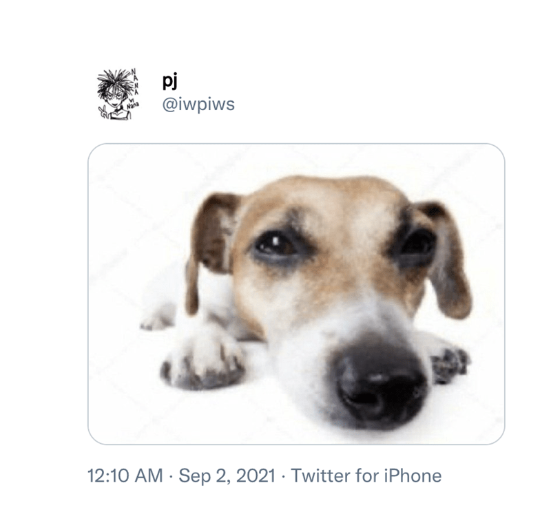 Dog - pj @iwpiws 12:10 AM · Sep 2, 2021 · Twitter for iPhone
