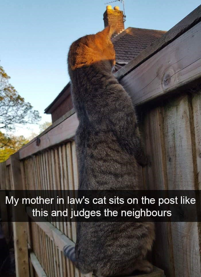 Sky - My mother in law's cat sits on the post like this and judges the neighbours