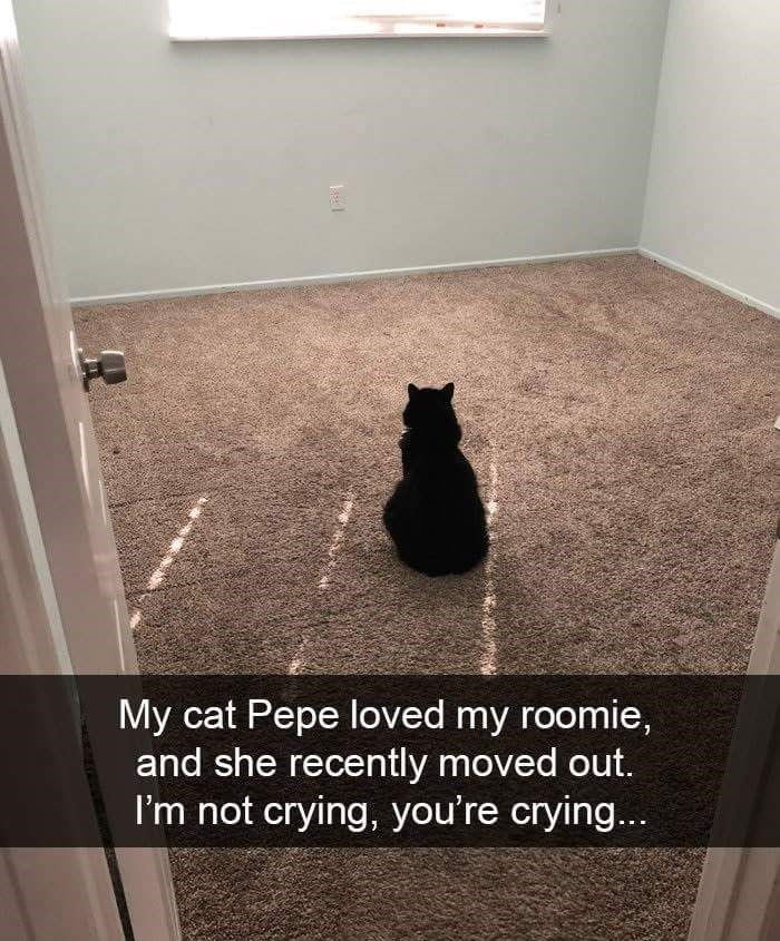 Cat - My cat Pepe loved my roomie, and she recently moved out. I'm not crying, you're crying...