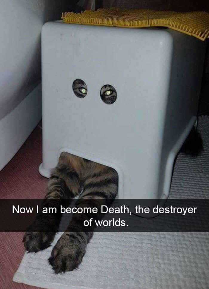 Carnivore - Now I am become Death, the destroyer of worlds.