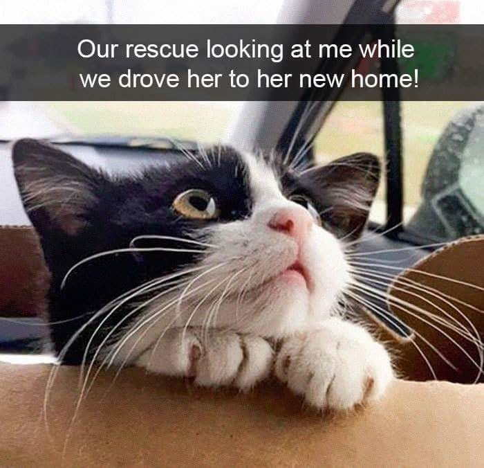 Nose - Our rescue looking at me while we drove her to her new home!