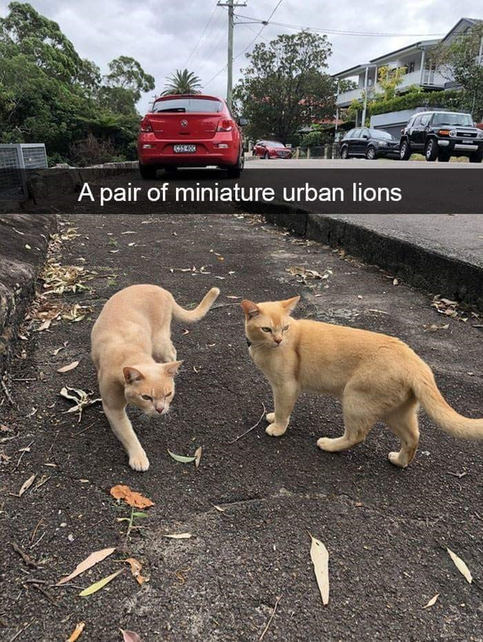 Cloud - A pair of miniature urban lions