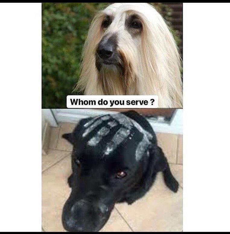 Dog - Whom do you serve ?