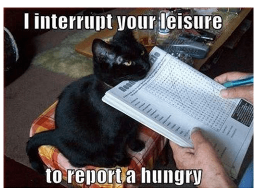 Cat - Tinterrupt your leisure to report a hungry