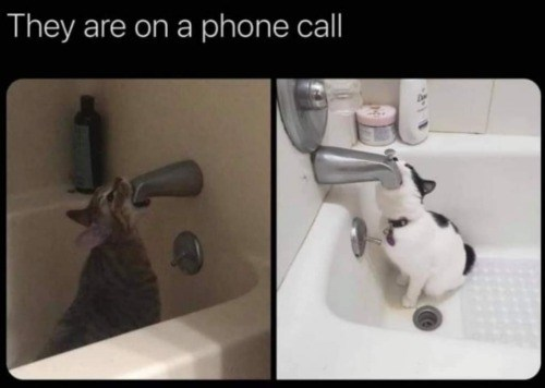 Tap - They are on a phone call
