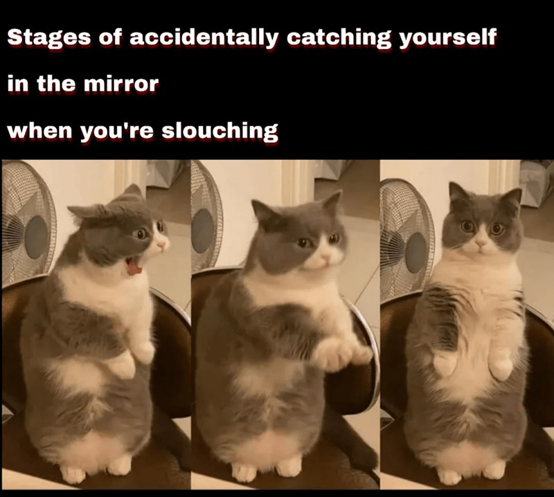 Cat - Stages of accidentally catching yourself in the mirror when you're slouching