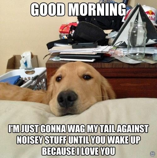 Dog - GOOD MORNING Bul IM JUST GONNA WAG MY TAIL AGAINST NOISEY STUFF UNTIL YOU WAKE UP BECAUSEILOVE YOU