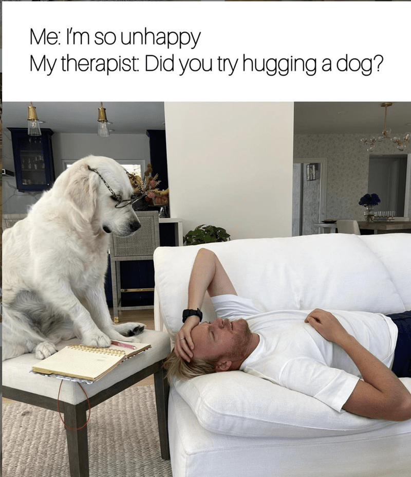 Couch - Me: 'm so unhappy My therapist: Did you try hugging a dog?