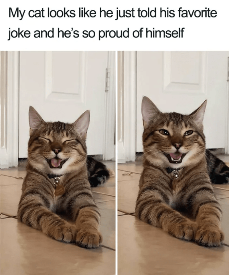 Cat - My cat looks like he just told his favorite joke and he's so proud of himself