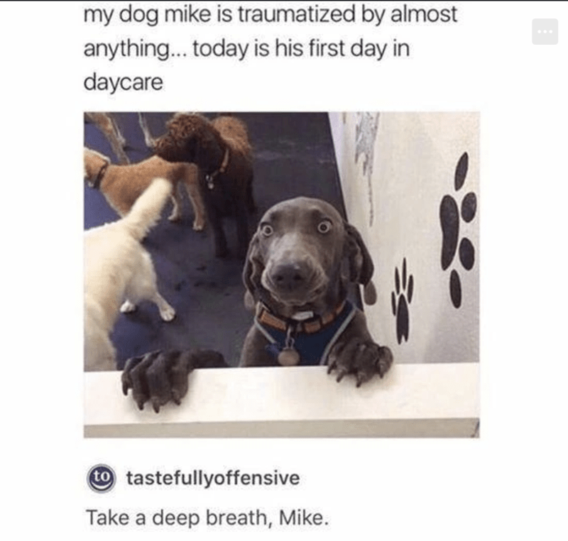 Dog - my dog mike is traumatized by almost anything... today is his first day in daycare to tastefullyoffensive Take a deep breath, Mike.