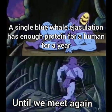 Purple - A single blue whale ejaculation has enough protein for a human for a year Until we meet again
