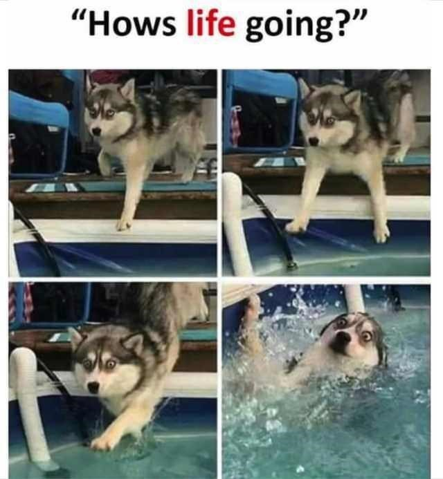 """Dog - """"Hows life going?"""""""