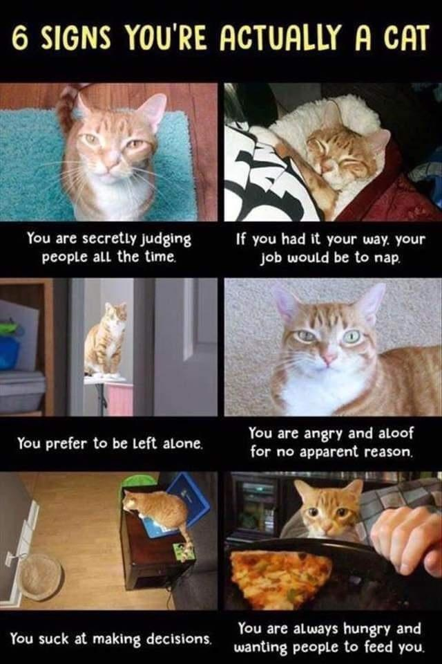 Cat - 6 SIGNS YOU'RE ACTUALLY A CAT You are secretly judging people all the time. If you had it your way. your job would be to nap. You are angry and aloof for no apparent reason, You prefer to be Left alone. You are always hungry and wanting people to feed you. You suck at making decisions.