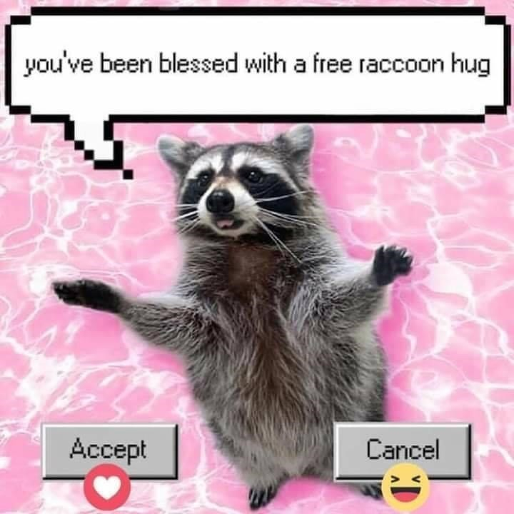 Carnivore - you've been blessed with a free raccoon hug Accept Cancel