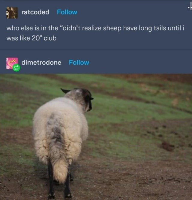 """Dog breed - ratcoded Follow who else is in the """"didn't realize sheep have long tails until i was like 20"""" club dimetrodone Follow"""
