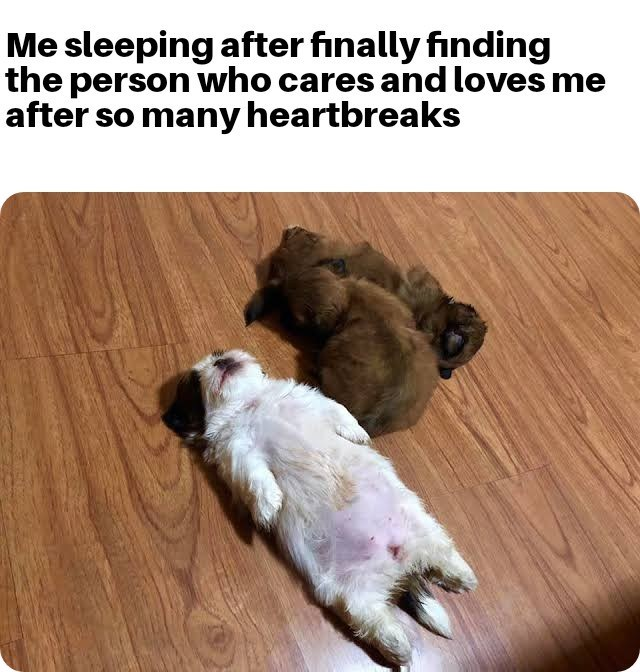 Dog - Me sleeping after finally finding the person who cares and loves me after so many heartbreaks