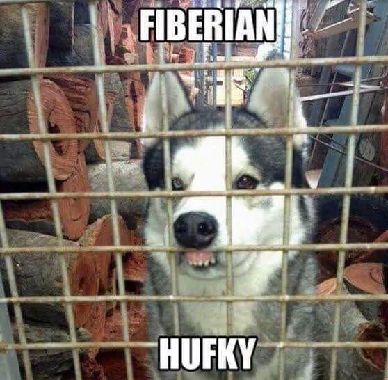 Dog - FIBERIAN HUFKY