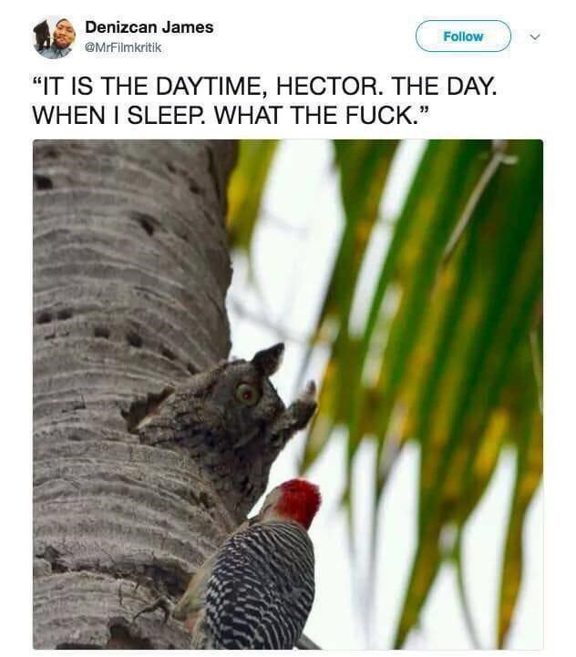 """Bird - Denizcan James Follow @MrFilmkritik """"IT IS THE DAYTIME, HECTOR. THE DAY. WHEN I SLEEP. WHAT THE FUCK."""""""