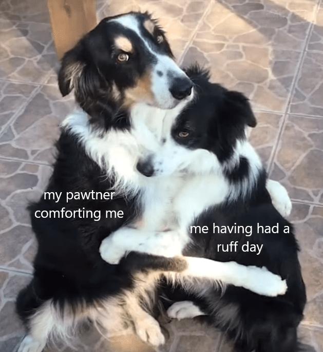Dog - my pawtner comforting me me having had a ruff day