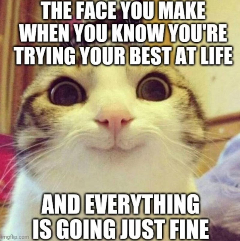 Cat - THE FACE YOU MAKE WHEN YOU KNOW YOU'RE TRYING YOUR BEST AT LIFE AND EVERYTHING IS GOING JUST FINE imgflip.com