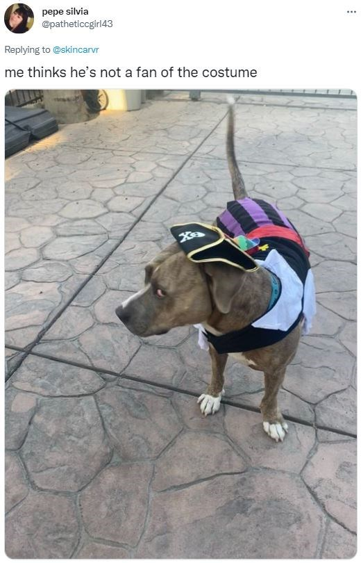 Dog - pepe silvia @patheticcgirl43 ... Replying to @skincarvr me thinks he's not a fan of the costume