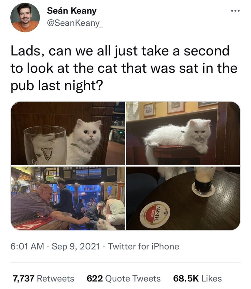 Vertebrate - Seán Keany •.. @SeanKeany_ Lads, can we all just take a second to look at the cat that was sat in the pub last night? 6:01 AM · Sep 9, 2021 · Twitter for iPhone 7,737 Retweets 622 Quote Tweets 68.5K Likes AMSTEL BIER