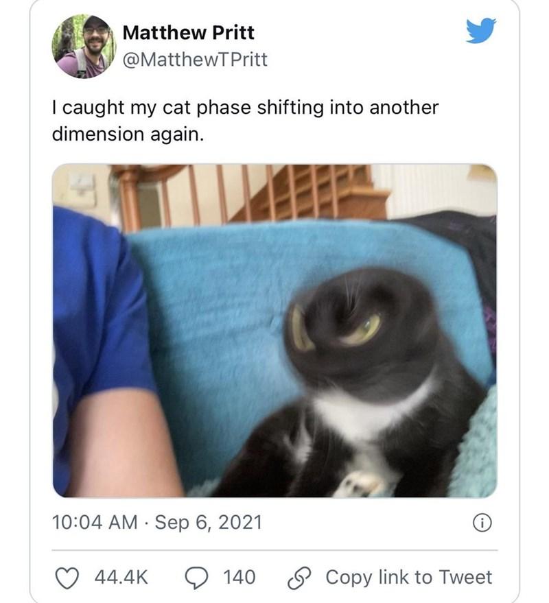 Photograph - Matthew Pritt @MatthewTPritt I caught my cat phase shifting into another dimension again. 10:04 AM · Sep 6, 2021 44.4K 140 O Copy link to Tweet