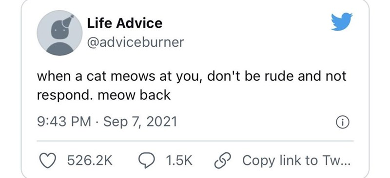 Font - Life Advice @adviceburner when a cat meows at you, don't be rude and not respond. meow back 9:43 PM · Sep 7, 2021 526.2K 1.5K S Copy link to Tw...