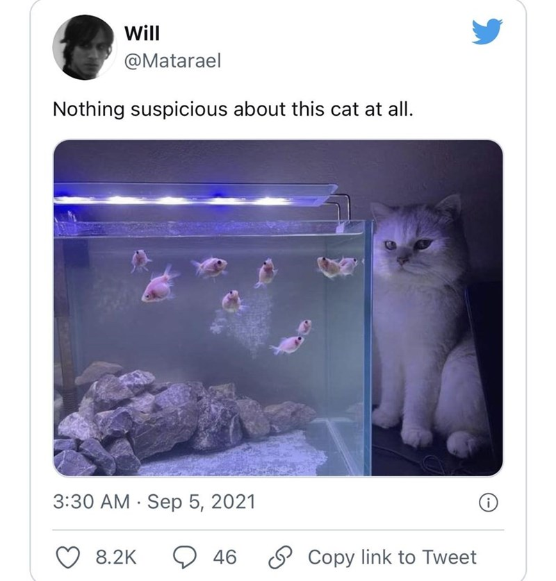 Cat - Will @Matarael Nothing suspicious about this cat at all. 3:30 AM · Sep 5, 2021 8.2K 46 O Copy link to Tweet
