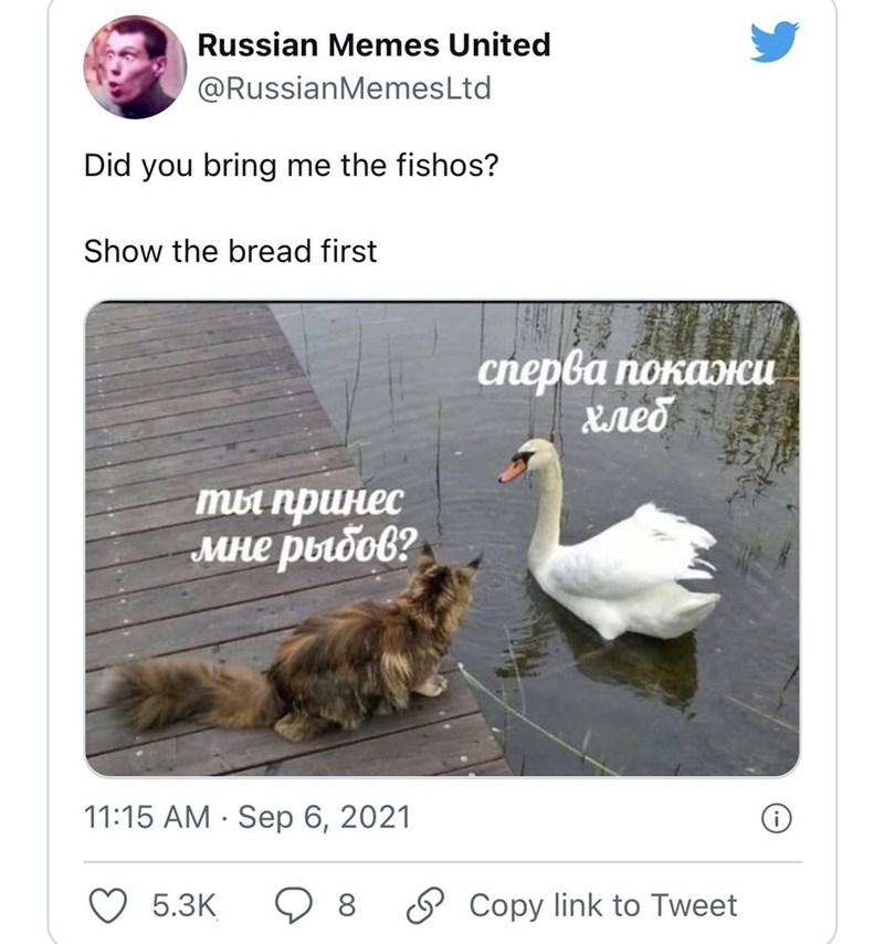 Bird - Russian Memes United @RussianMemesLtd Did you bring me the fishos? Show the bread first сперва покажи Xreo ты принес мне рыбов? 11:15 AM · Sep 6, 2021 5.3К 8 Copy link to Tweet