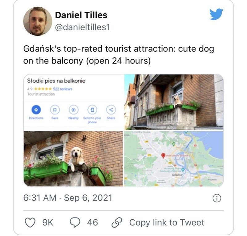 Property - Daniel Tilles @danieltilles1 Gdańsk's top-rated tourist attraction: cute dog on the balcony (open 24 hours) Słodki pies na balkonie 4.9 ***** 522 reviews Tourist attraction Directions Nearby Send to your phone Save Share Mueu y Gdańsk RUDNIK 6:31 AM · Sep 6, 2021 9K 9 46 O Copy link to Tweet