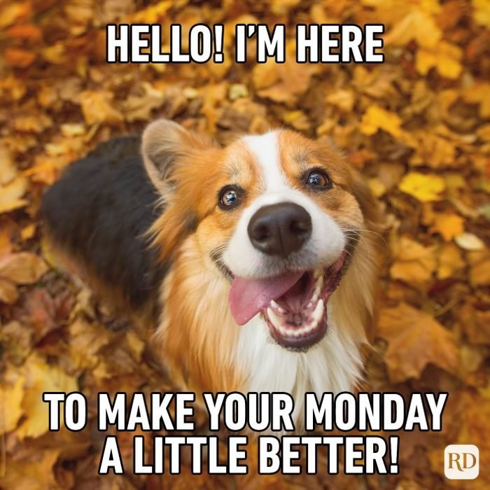 Dog - HELLO! I'M HERE TO MAKE YOUR MONDAY A LITTLE BETTER! RD