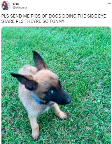 Dog - aloe ... @skincarvr PLS SEND ME PICS OF DOGS DOING THE SIDE EYE STARE PLS THEYRE SO FUNNY