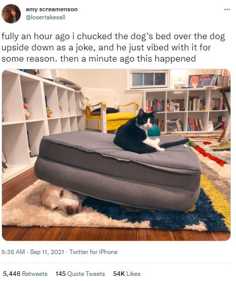 Furniture - amy screamenson ... @losertakesall fully an hour ago i chucked the dog's bed over the dog upside down as a joke, and he just vibed with it for some reason. then a minute ago this happened 5:35 AM · Sep 11, 2021 · Twitter for iPhone 5,446 Retweets 145 Quote Tweets 54K Likes