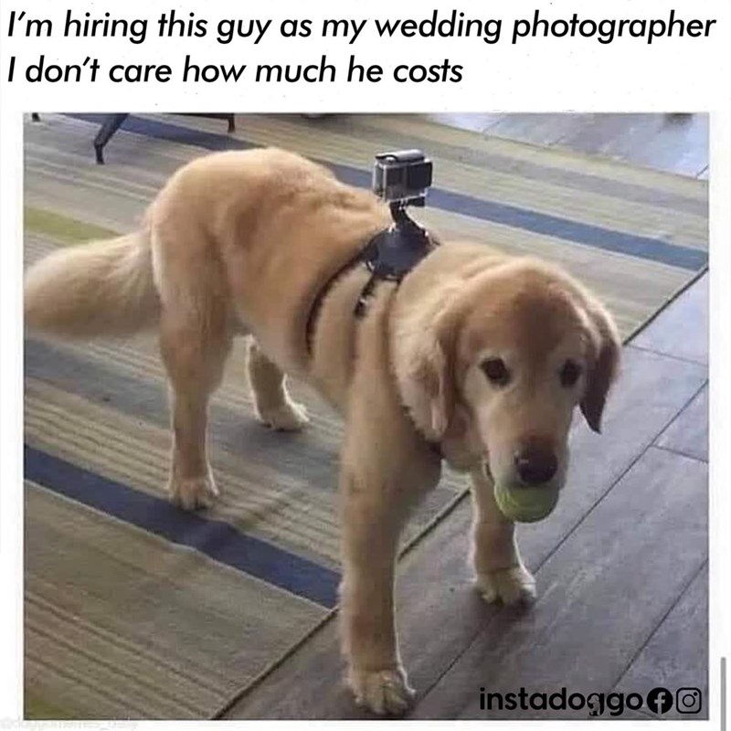 Dog - I'm hiring this guy as my wedding photographer I don't care how much he costs instadoggoAO