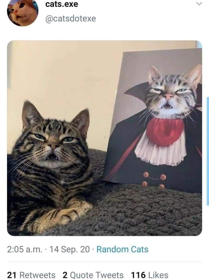 Cat - cats.exe @catsdotexe 2:05 a.m. 14 Sep. 20 Random Cats 21 Retweets 2 Quote Tweets 116 Likes