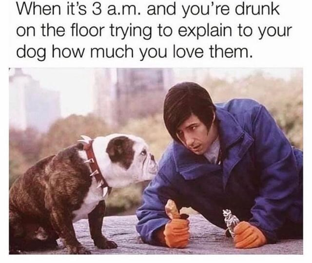 Dog - When it's 3 a.m. and you're drunk on the floor trying to explain to your dog how much you love them.