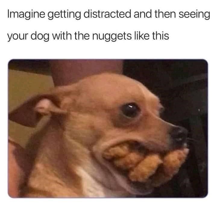 Dog - Imagine getting distracted and then seeing your dog with the nuggets like this