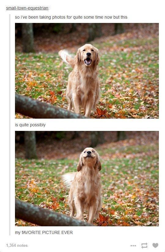Dog - small-town-equestrian: so i've been taking photos for quite some time now but this is quite possibly my FAVORITE PICTURE EVER 1,364 notes