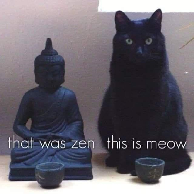 Cat - that was zen this is meow