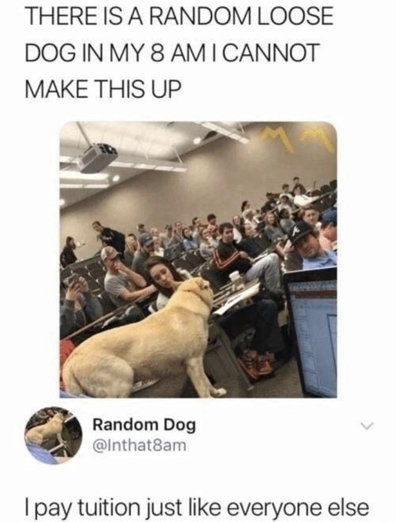 Dog - THERE IS A RANDOM LOOSE DOG IN MY 8 AM I CANNOT MAKE THIS UP Random Dog @Inthat8am I pay tuition just like everyone else