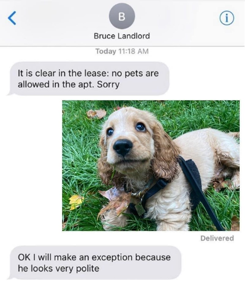 Dog - Bruce Landlord Today 11:18 AM It is clear in the lease: no pets are allowed in the apt. Sorry Delivered OK I will make an exception because he looks very polite
