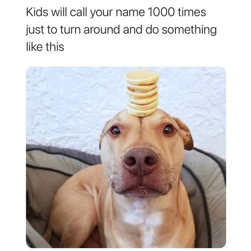Dog - Kids will call your name 1000 times just to turn around and do something like this
