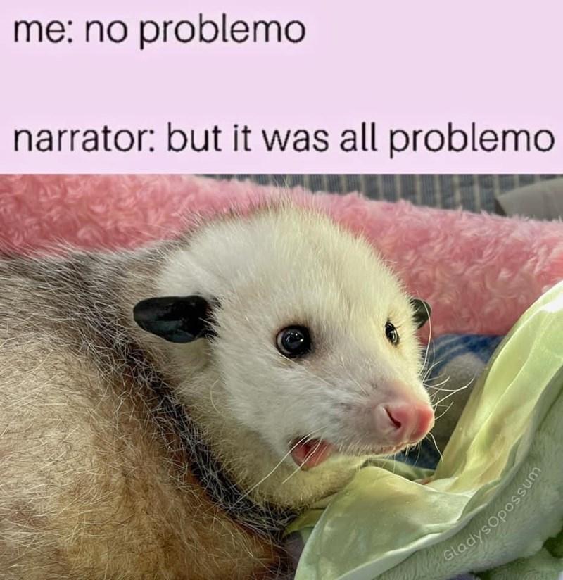Ferret - me: no problemo narrator: but it was all problemo GladysOpossum