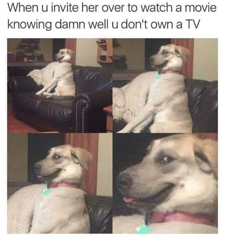 Dog - When u invite her over to watch a movie knowing damn well u don't own a TV