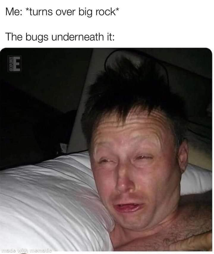 Forehead - Me: *turns over big rock* The bugs underneath it: made with imematic EXPLORIZE